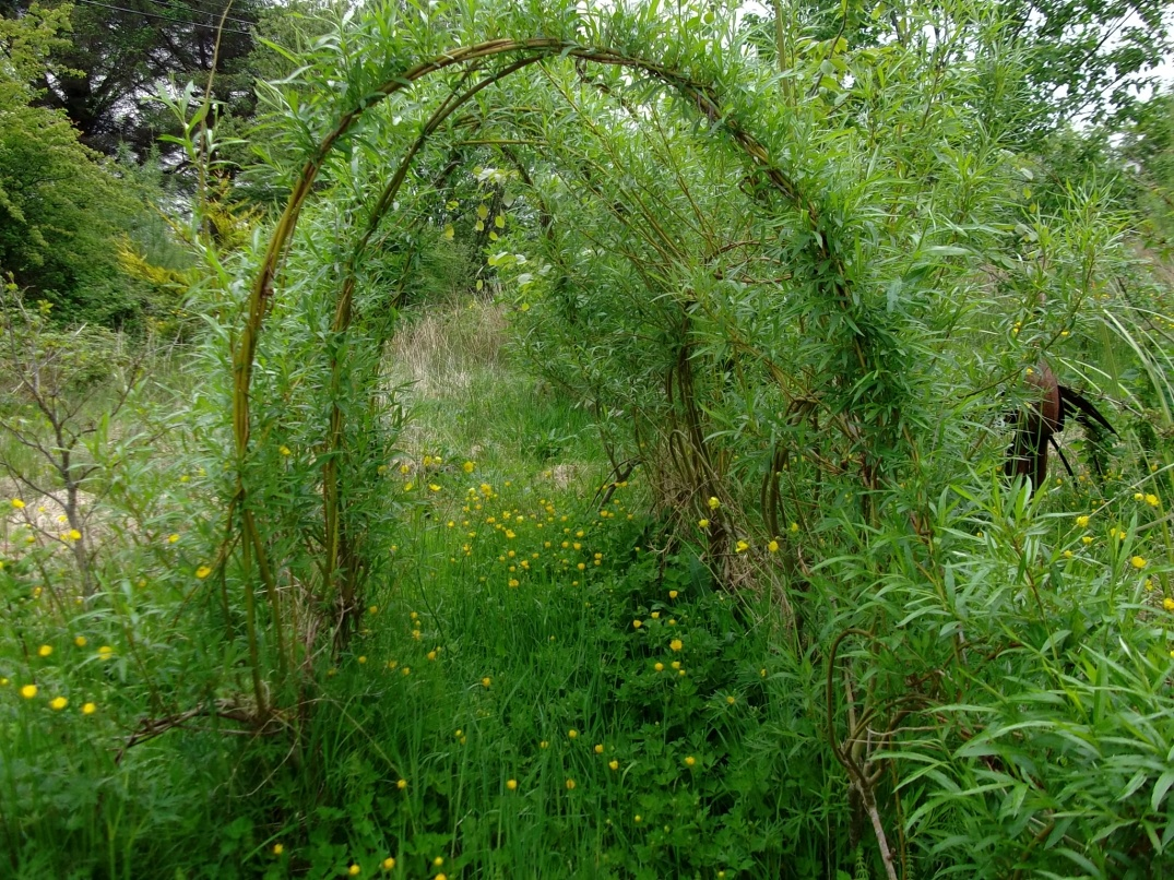 willow archway at Bealtaine Cottage permaculture gardens