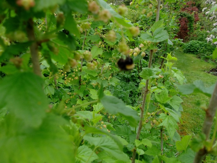 Plenty of bees in the permaculture gardens ensure masses of fruit and vegetables