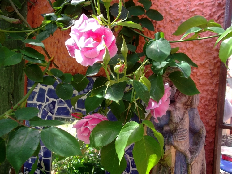 Roses on the veranda at Bealtaine Cottage