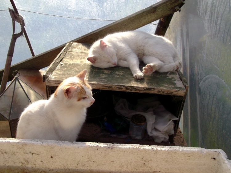 The cats at Bealtaine Cottage