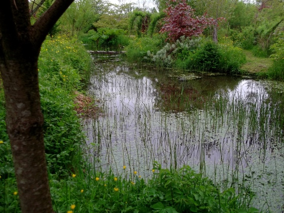 Pond in May at Bealtaine Cottage