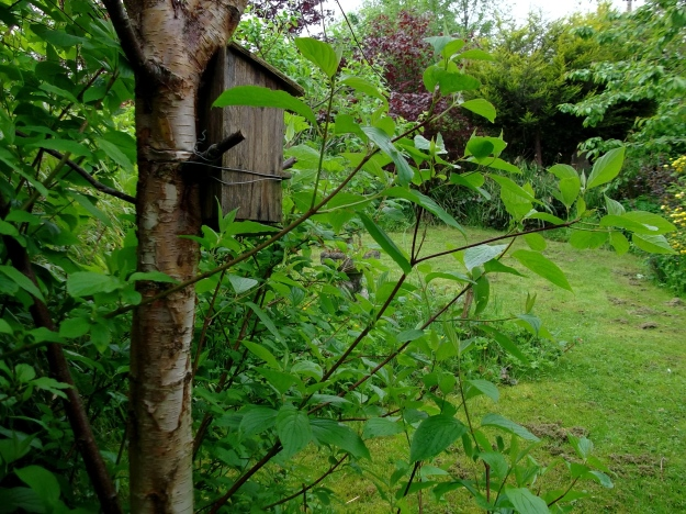 bird and bee house at bealtaine cottage