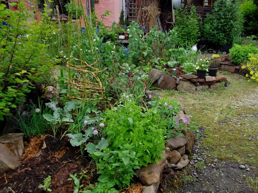 potager beds at bealtaine cottage after the rain