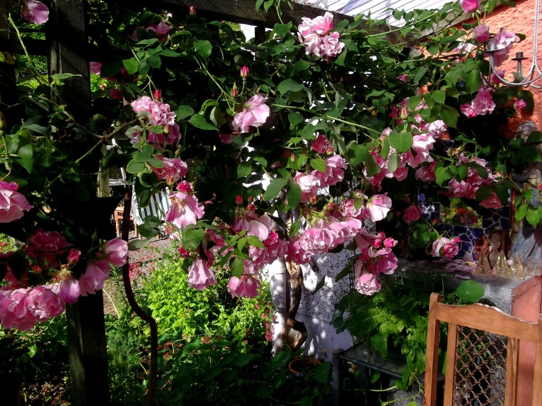 roses on veranda