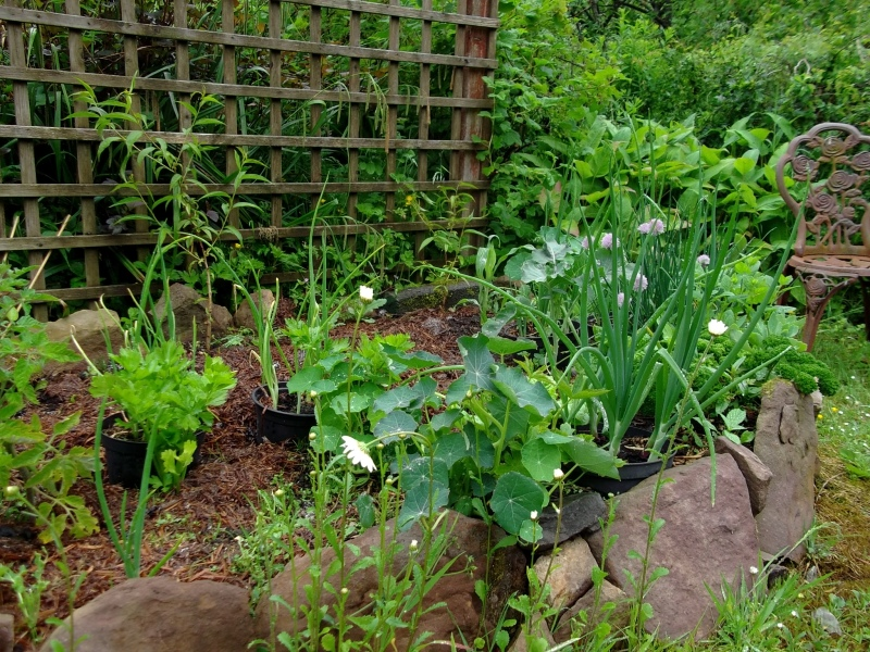 potager beds and peach trees at bealtaine cottage