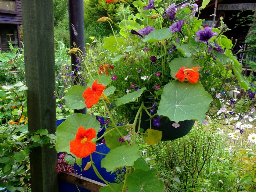 Hanging basket at Bealtaine Cottage