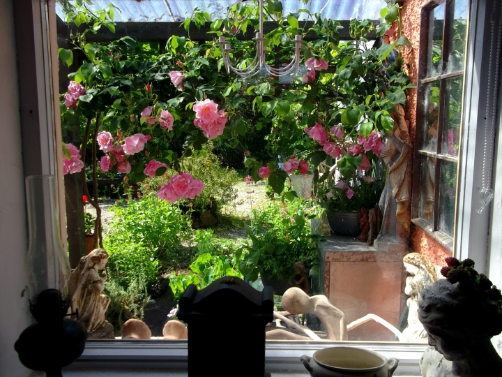 Bealtaine Cottage roses