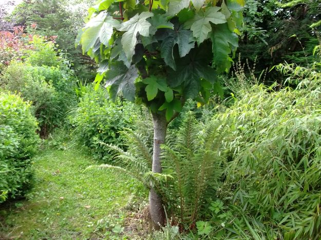 Sycamore and Fern at Bealtaine Cottage