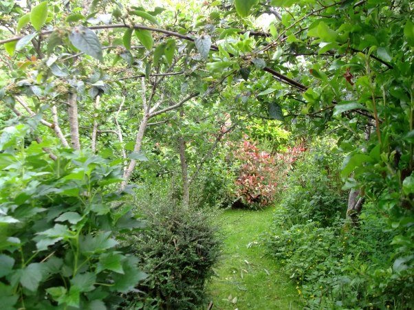Fruit trees and berry bushes in the permaculture gardens of bealtaine Cottage