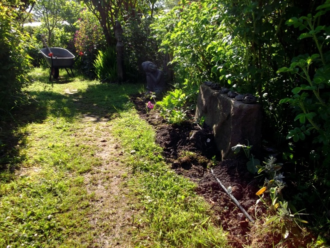 Morning at Bealtaine Cottage gardens, June 2013
