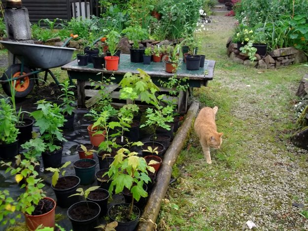 The plant and tree nursery and Missy