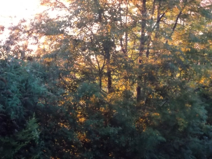 Sunset through the trees at Bealtaine Cottage