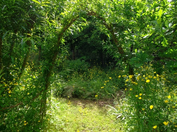 Willow arch and buttercups