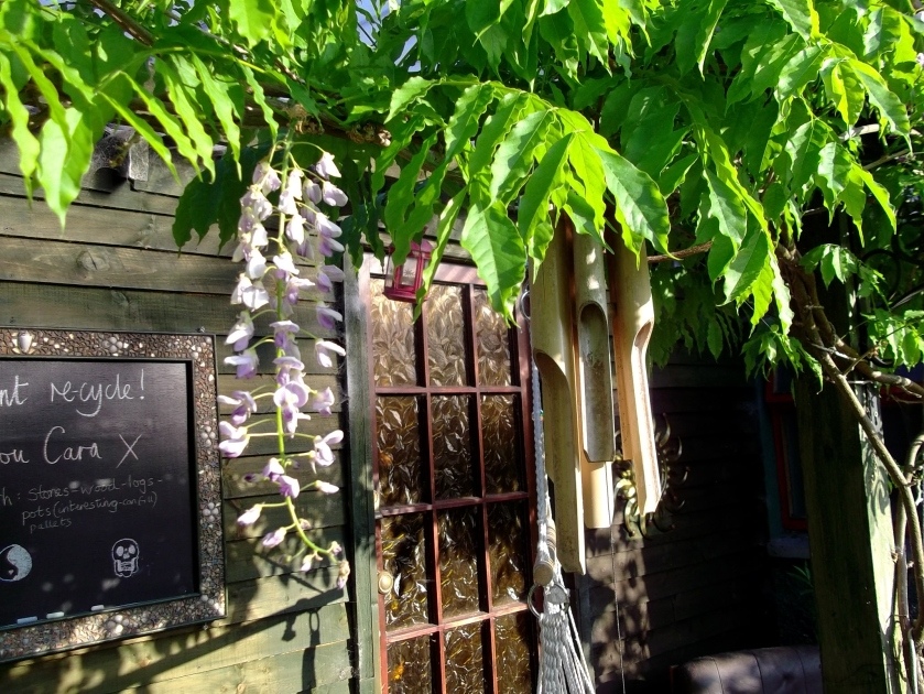 Wisteria in flower at Bealtaine Cottage