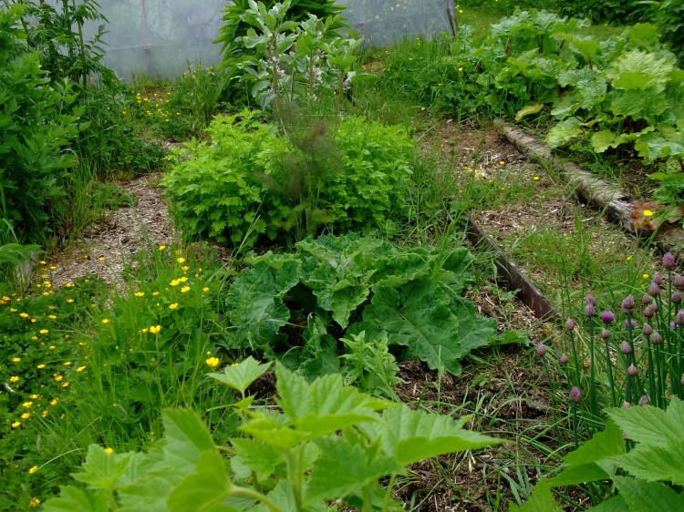 Herbs at bealtaine Cottage
