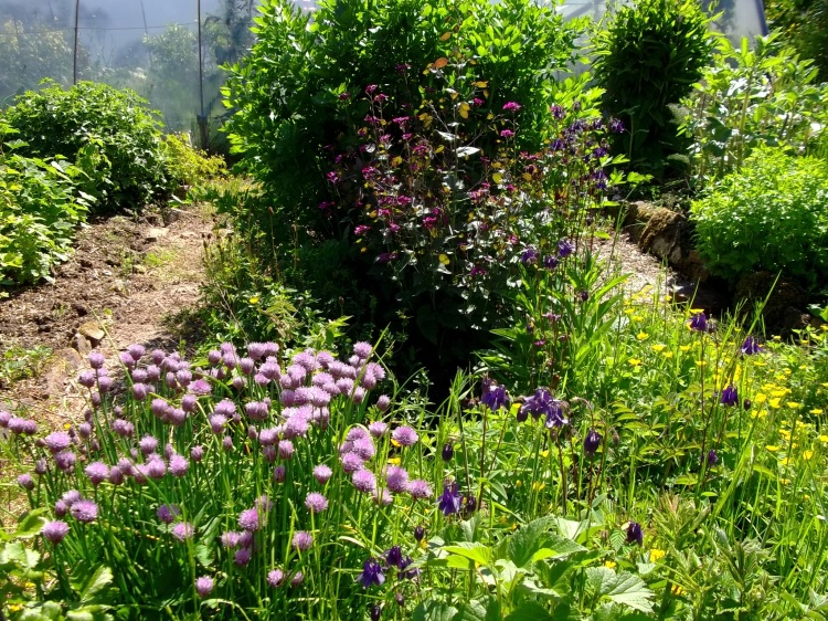 Herb bed in permaculture garden at Bealtaine Cottage
