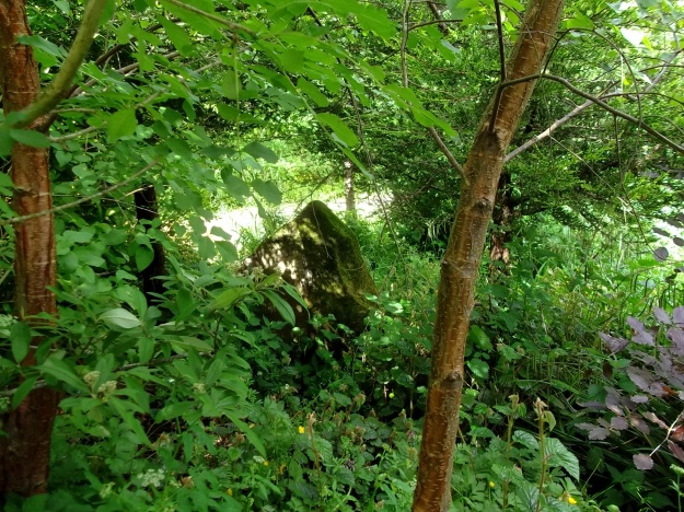 Trees at Bealtaine Cottage