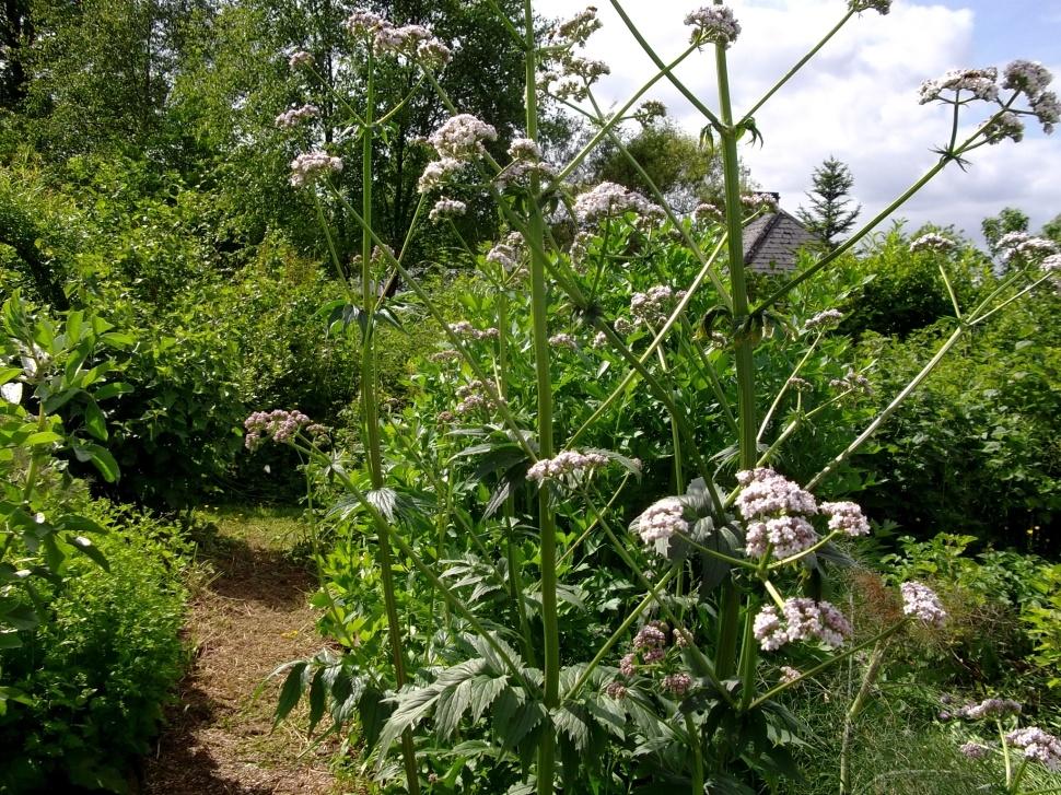 herb gardens at bealtaine cottage