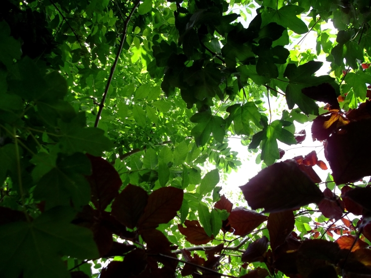 A canopy of Beech,Birch, Ash and Field Maple today at Bealtaine Cottage