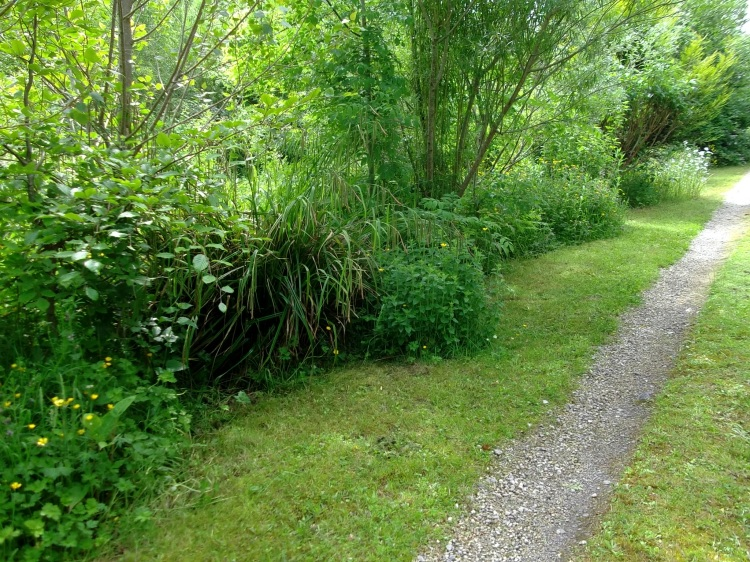 driveway at bealtaine Cottage