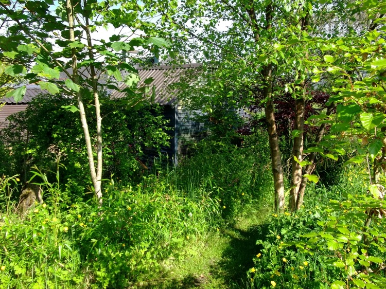 Bealtaine Cottage permaculture gardens in June 2013