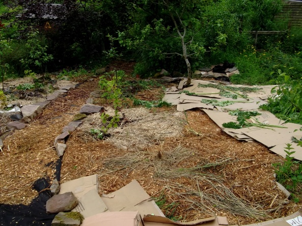 weed suppressing with cardboard