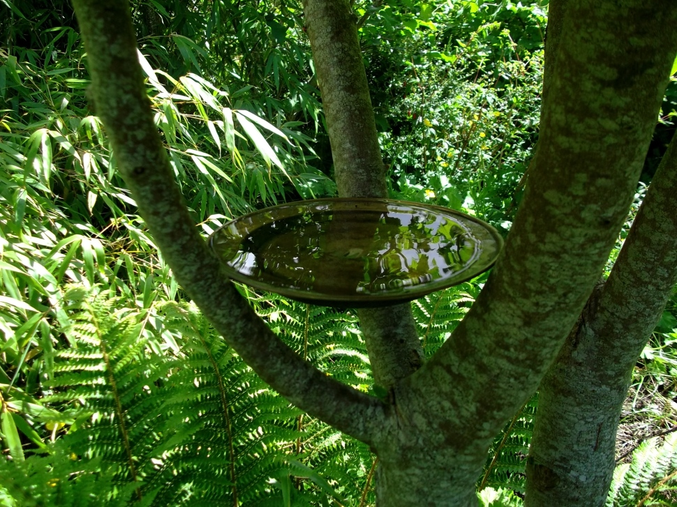 bird bath in pollarded Sycamore at Bealtaine Cottage