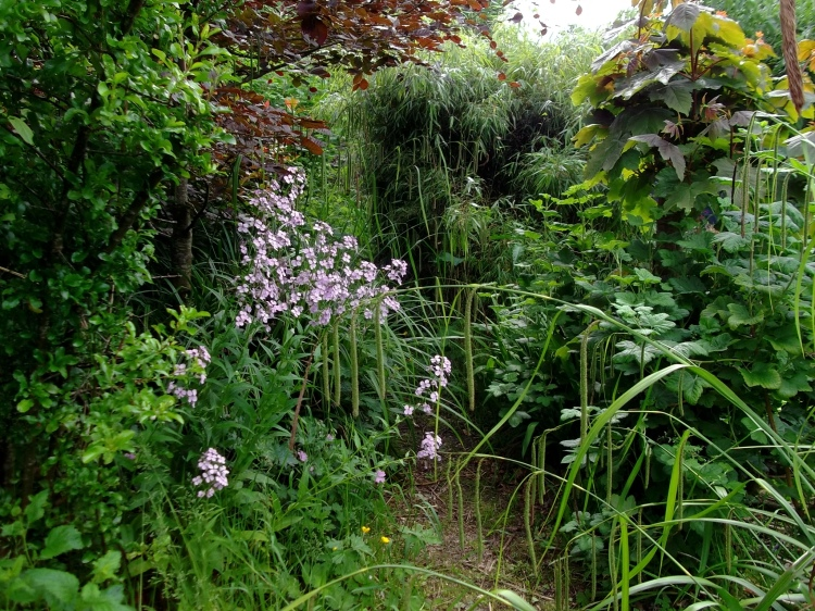 permaculture garden at bealtaine cottage