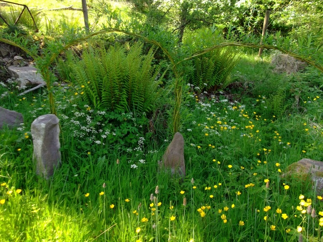 Cow Parsley and Ferns by the Stone Circle