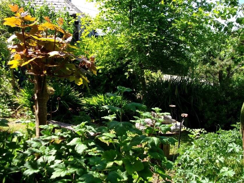 Permaculture gardens at Bealtaine Cottage