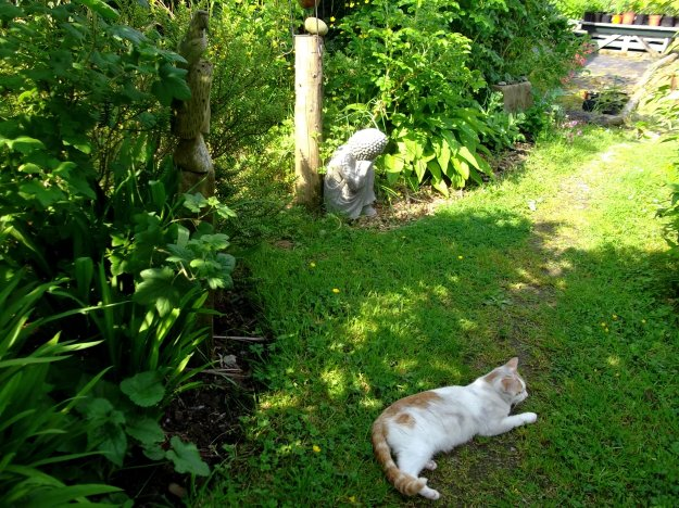 Cats in the shade at bealtaine cottage