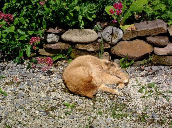 Missy today in the sun at Bealtaine Cottage