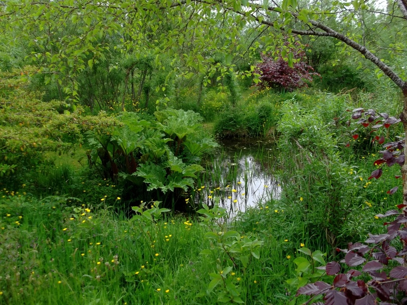Water garden in permaculture at Bealtaine Cottage