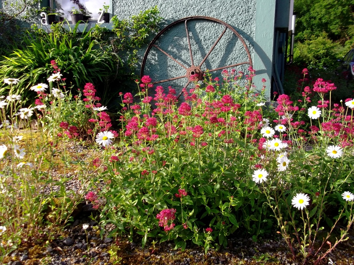 Solstice morning at Bealtaine Cottage 2013