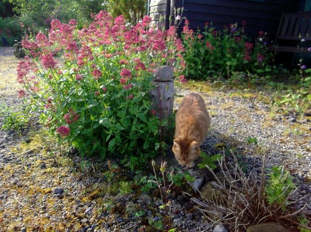 Missy on midsummer morning