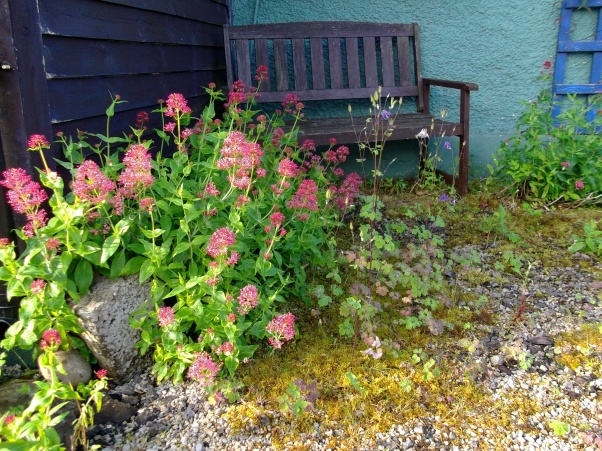 Bealtaine Cottage midsummer morning