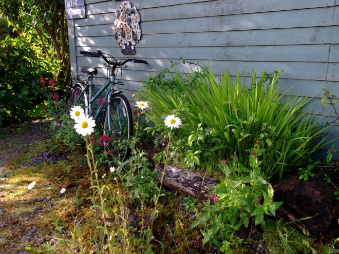 Midsummer morning at Bealtaine Cottage