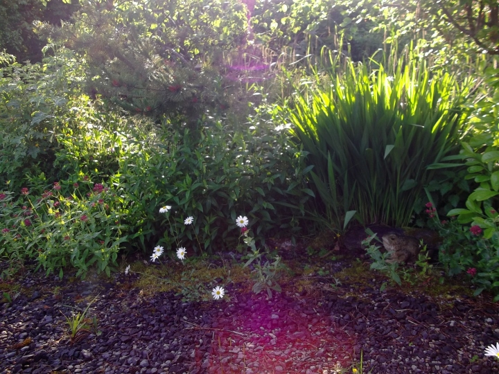 Midsummer at Bealtaine Cottage