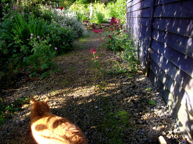 Midsummer morning at Bealtaine Cottage...and Missy