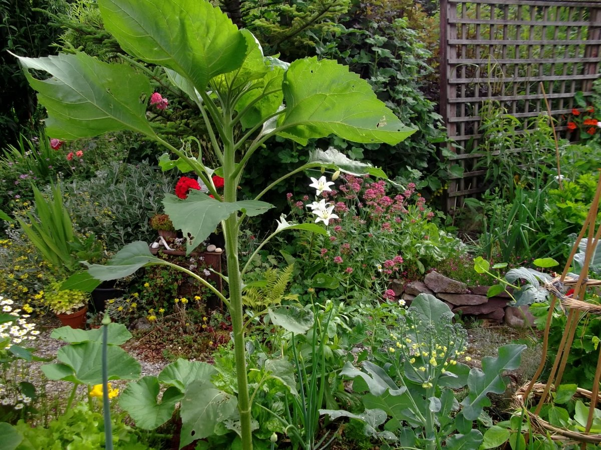 Bealtaine Cottage Garden