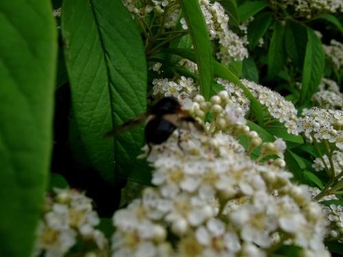 strange bee