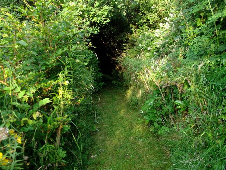 entrance to the fairy wood at bealtaine cottage
