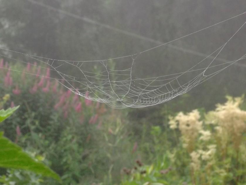 hanging web