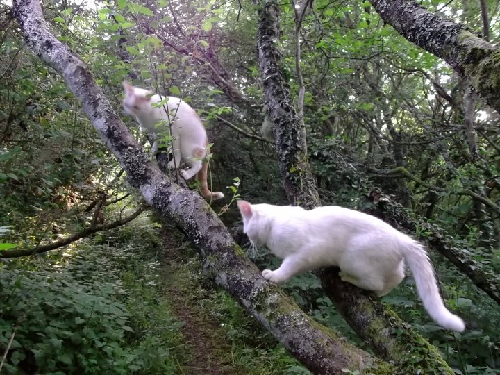 Fairy cats in the fairy wood