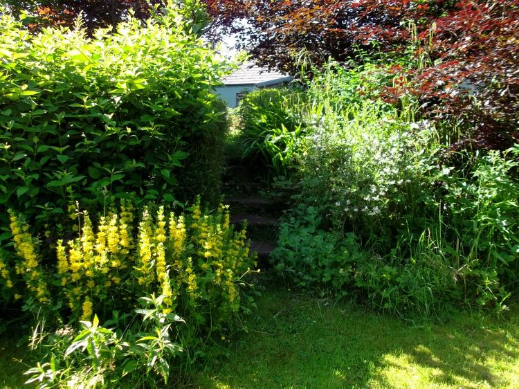 Front garden at Bealtaine