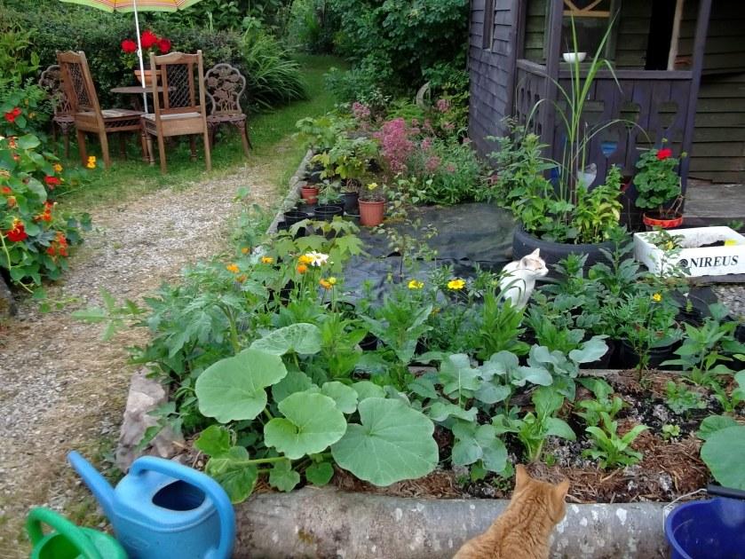 Cottage Garden Harvest