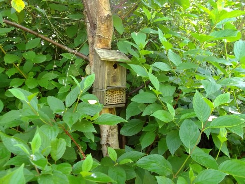 Box for the birds and the bees