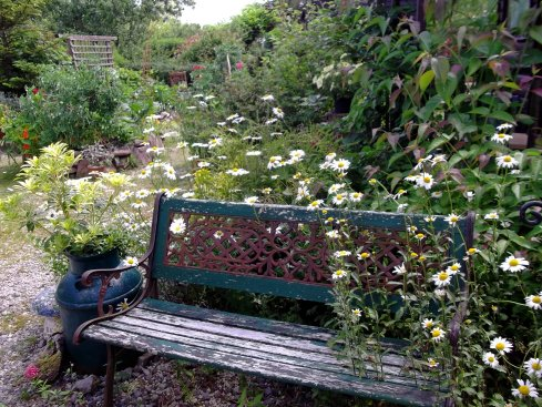 Bench and Ox-Eye daisies at Bealtaine Cottage