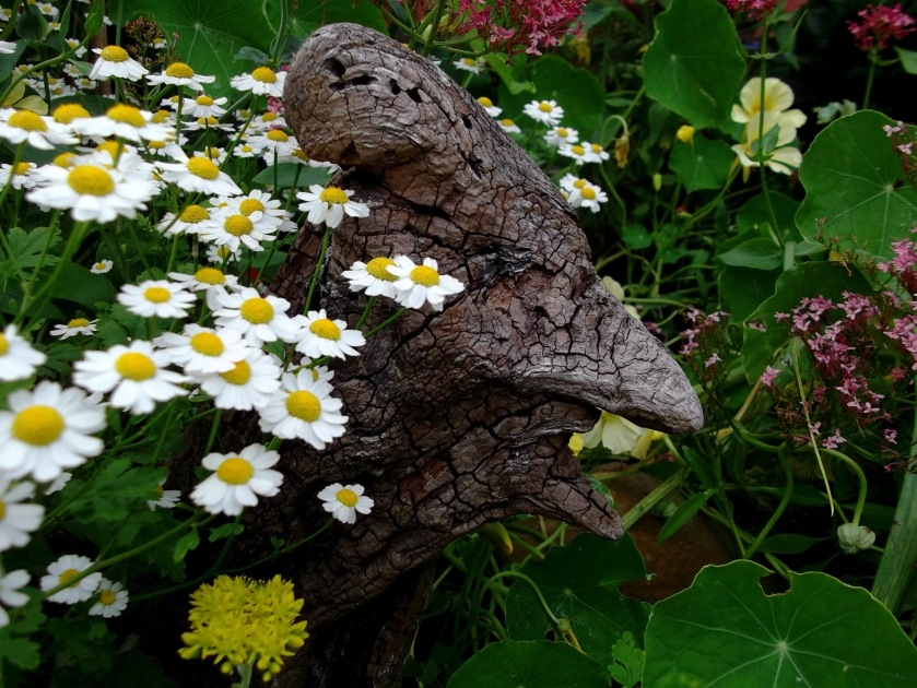 Feverfew and Driftwood