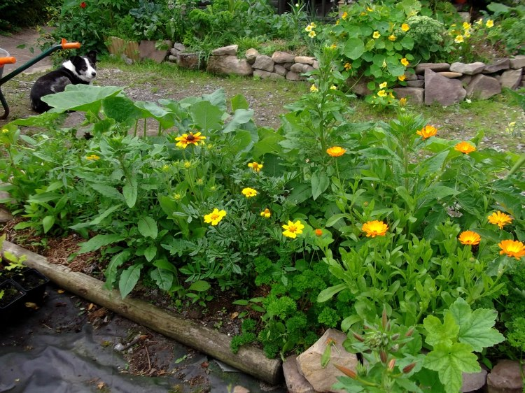 potager bed